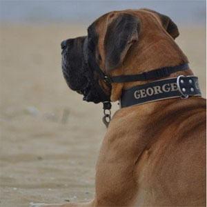 Halsbanden voor grote honden