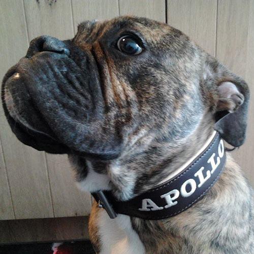 Honden Halsband leer handgemaakt 30mm breed