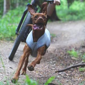 honden koelvest ruffwear swampcooler