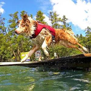 hondenzwemvest-reddingsvest-honden