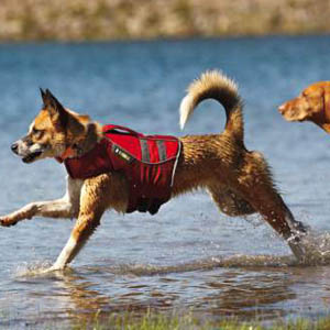 Hondenzwemvest-ruffwear-k-9